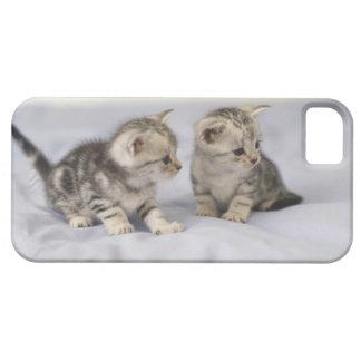 American Shorthair 7 iPhone 5 Case