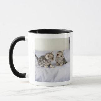 American Shorthair 7 Mug