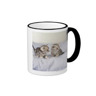 American Shorthair 7 Ringer Mug