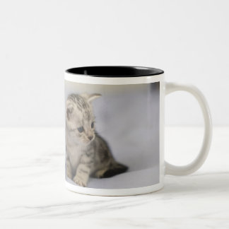 American Shorthair 7 Two-Tone Coffee Mug