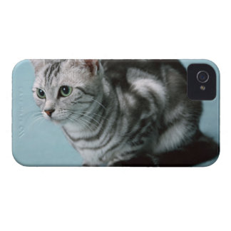 American Shorthair Case-Mate iPhone 4 Cases