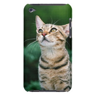 American Shorthair Case-Mate iPod Touch Case