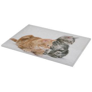 American Shorthair Cat 2 Cutting Board