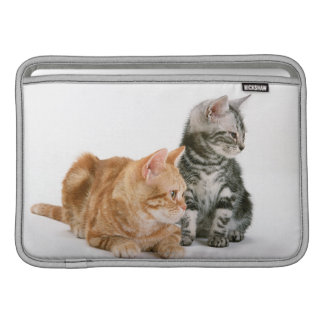 American Shorthair Cat 2 MacBook Sleeves