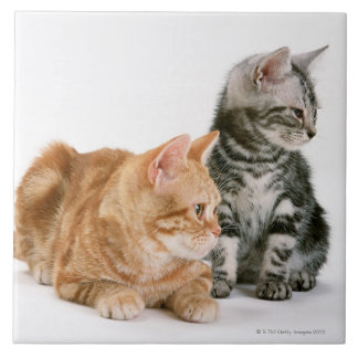 American Shorthair Cat 2 Tile