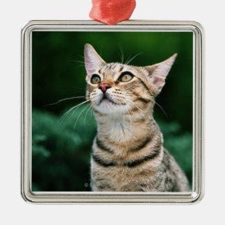 American Shorthair Christmas Ornament