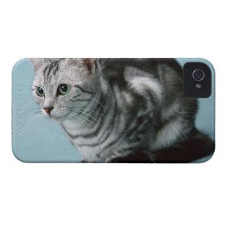 American Shorthair iPhone 4 Case