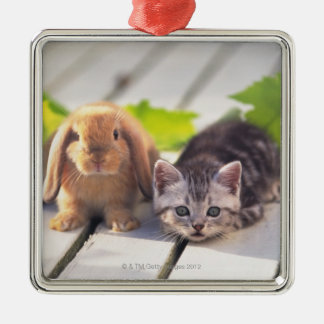 American Shorthair; is the most popular and most Silver-Colored Square Decoration
