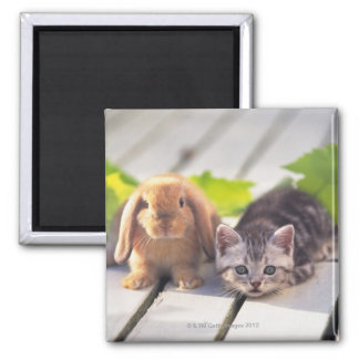American Shorthair; is the most popular and most Square Magnet