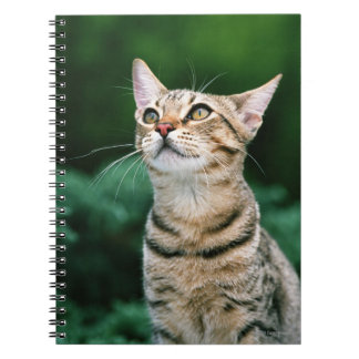 American Shorthair Notebooks