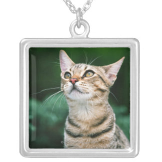 American Shorthair Silver Plated Necklace