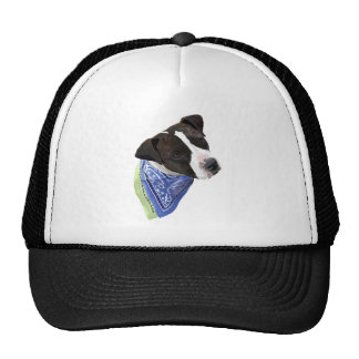 American Staffordshire Terrier-Aggie Hats