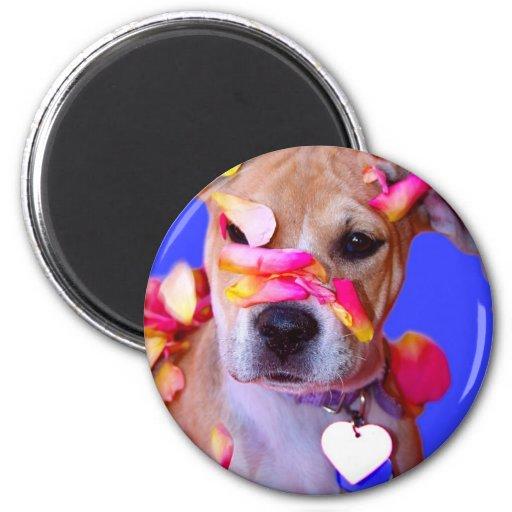 American Staffordshire Terrier Boxer Mix Puppy Dog 6 Cm Round Magnet