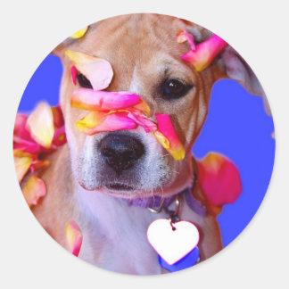 American Staffordshire Terrier Boxer Mix Puppy Dog Classic Round Sticker