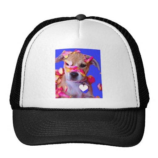 American Staffordshire Terrier Boxer Mix Puppy Dog Trucker Hat