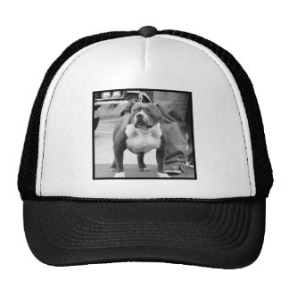 American Staffordshire Terrier cap Mesh Hat