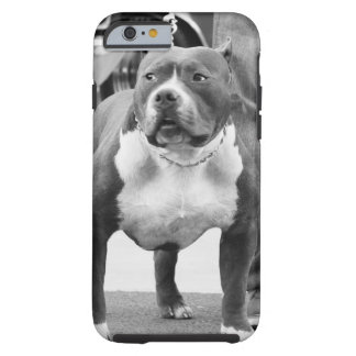 American Staffordshire terrier Tough iPhone 6 Case