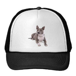 american staffordshire terrier casquettes