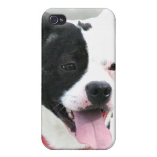 American Staffordshire Terrier iPhone 4/4S Cover