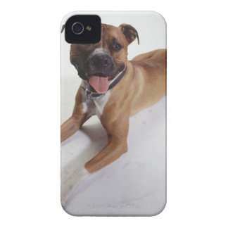 American Staffordshire Terrier lying down, iPhone 4 Case-Mate Cases