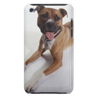 American Staffordshire Terrier lying down, iPod Case-Mate Cases