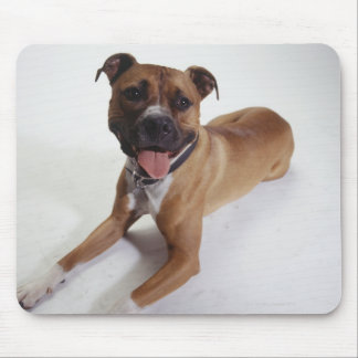 American Staffordshire Terrier lying down, Mouse Mat