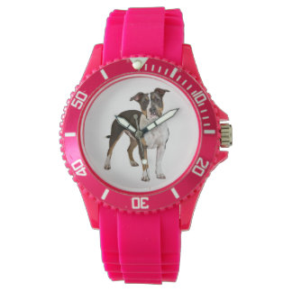 American Staffordshire Terrier Puppy Dog - Amstaff Watch