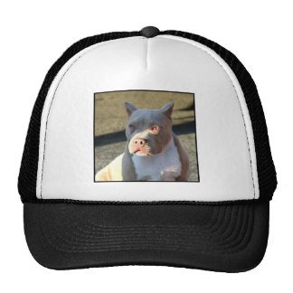 American Staffordshire Terrier puppy Hat