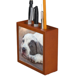 American Staffordshire Terrier puppy lying down Desk Organiser
