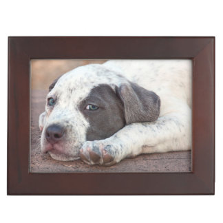 American Staffordshire Terrier puppy lying down Keepsake Boxes