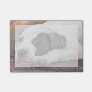 American Staffordshire Terrier puppy lying down Post-it® Notes