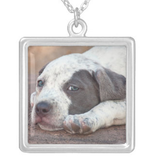 American Staffordshire Terrier puppy lying down Silver Plated Necklace