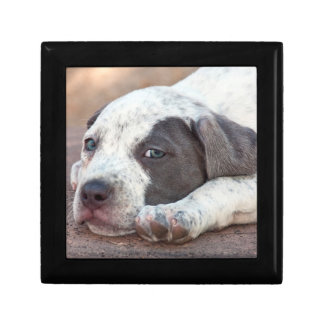 American Staffordshire Terrier puppy lying down Small Square Gift Box