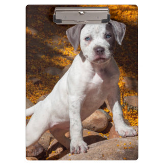 American Staffordshire Terrier puppy Portrait 2 Clipboards