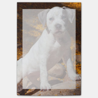 American Staffordshire Terrier puppy Portrait 2 Post-it® Notes
