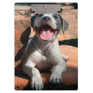 American Staffordshire Terrier puppy Portrait 4 Clipboards