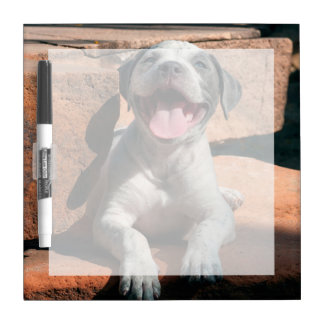 American Staffordshire Terrier puppy Portrait 4 Dry Erase Whiteboards