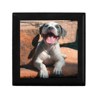 American Staffordshire Terrier puppy Portrait 4 Small Square Gift Box