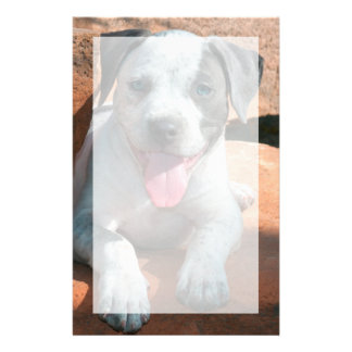 American Staffordshire Terrier puppy Portrait Custom Stationery