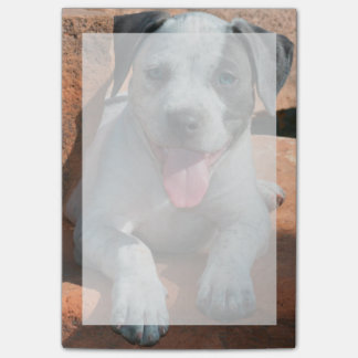 American Staffordshire Terrier puppy Portrait Post-it® Notes