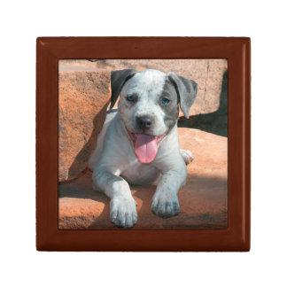 American Staffordshire Terrier puppy Portrait Small Square Gift Box