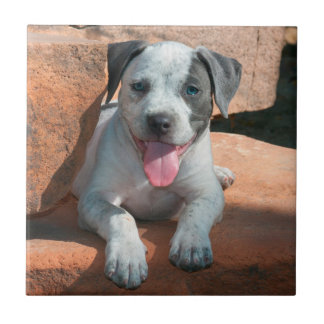 American Staffordshire Terrier puppy Portrait Tile