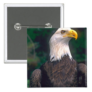 American Symbol of Freedom The Bald Eagle in the 15 Cm Square Badge