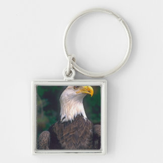 American Symbol of Freedom The Bald Eagle in the Key Ring