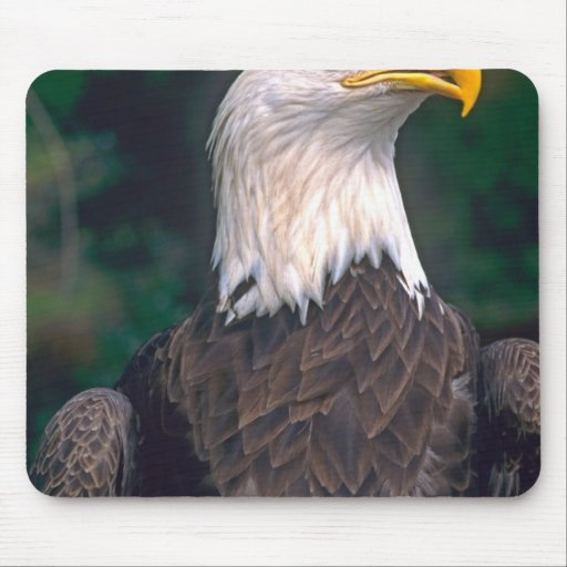 American Symbol of Freedom The Bald Eagle in the Mousepad