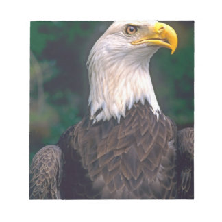 American Symbol of Freedom The Bald Eagle in the Notepad