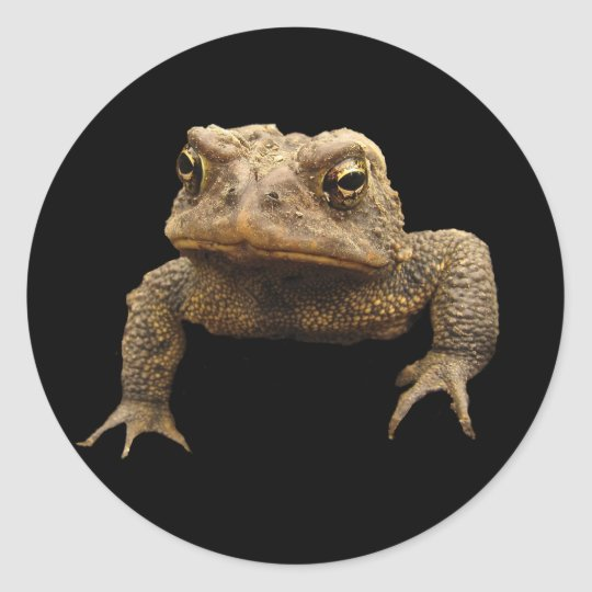 American Toad Classic Round Sticker