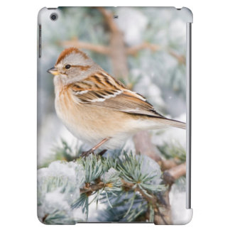 American Tree Sparrow in winter