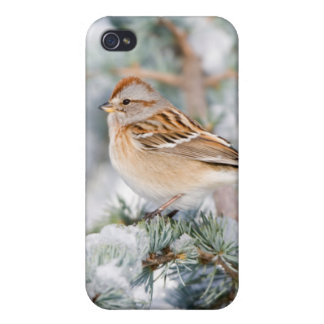 American Tree Sparrow in winter iPhone 4/4S Cover