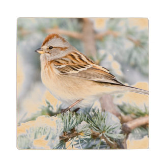 American Tree Sparrow in winter Wood Coaster